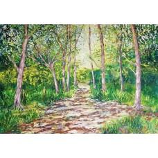 Woodland walk near Hengistbury Head
